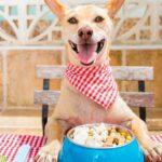 Comida para perros ¿mejor pienso o alimento húmedo?