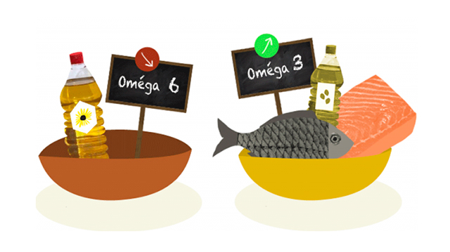 comida de perros acidos grasos