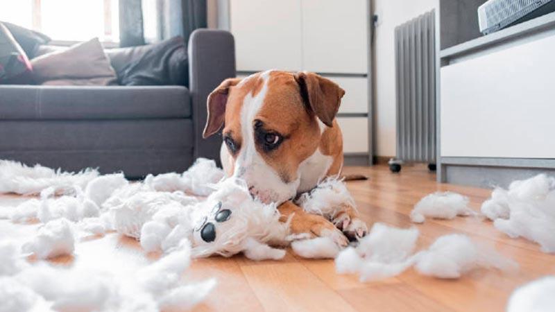 Ansiedad por separación en los perros